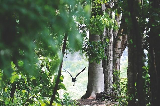 Blog IpsisPro Pássaro-voando-na-RPPN-Amadeu-Botelho-blog-ipsispro Bate papo com fotógrafo e lançamento de livro