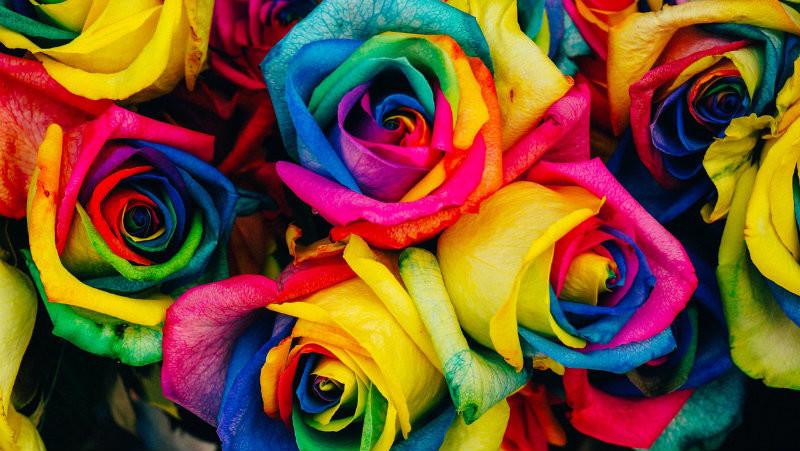 Blog IpsisPro combinação-de-cores-na-fotografia Aprenda a usar a combinação de cores na fotografia para emocionar seus clientes